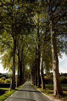 Trees by the Dronne 1 - Aubeterre