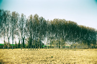 Trees II - Near Cherval