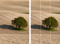 Guide to the Rule of Thirds - Step 6