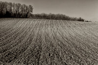 Ploughed Field & Trees- Nanteuil